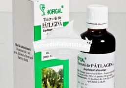 TINCTURA PATLAGINA 50ml HOFIGAL Tratament naturist ulcer alergii tuse guturai