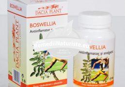 BOSWELLIA 60cpr DACIA PLANT Tratament naturist antiinflamator analgezic poliartrita reumatoidala reumatism cronic degenerativ